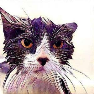 Mr Grumpy Cat.